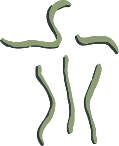 Logo Centrum voor Fysiotherapie Soest